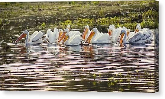 White Pelican Parade Canvas Print
