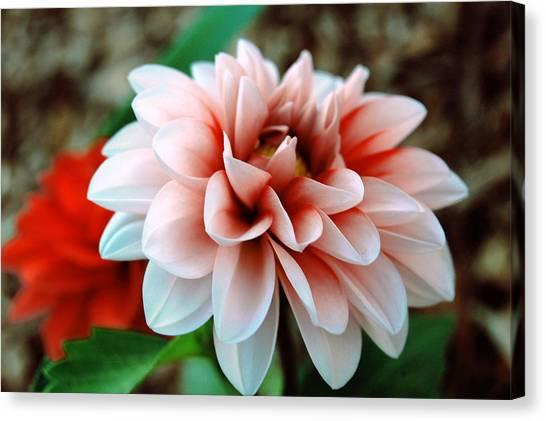 White Red Flower Canvas Print