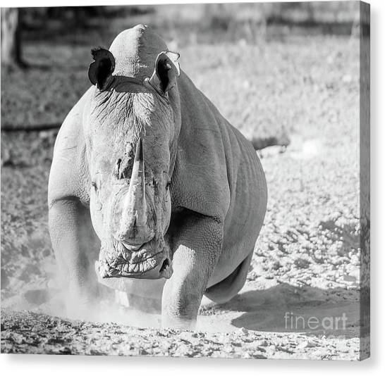 Big South Canvas Print - White Rhino Black And White by Tim Hester