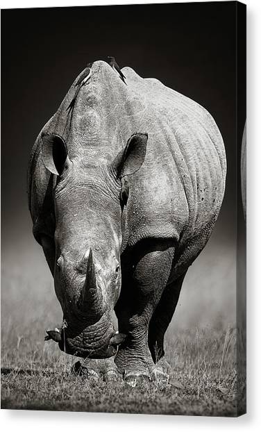 Rhinos Canvas Print - White Rhinoceros  In Due-tone by Johan Swanepoel