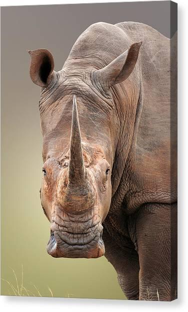 Rhinos Canvas Print - White Rhinoceros Portrait by Johan Swanepoel