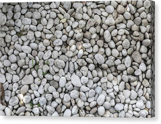 White Rocks Field Canvas Print