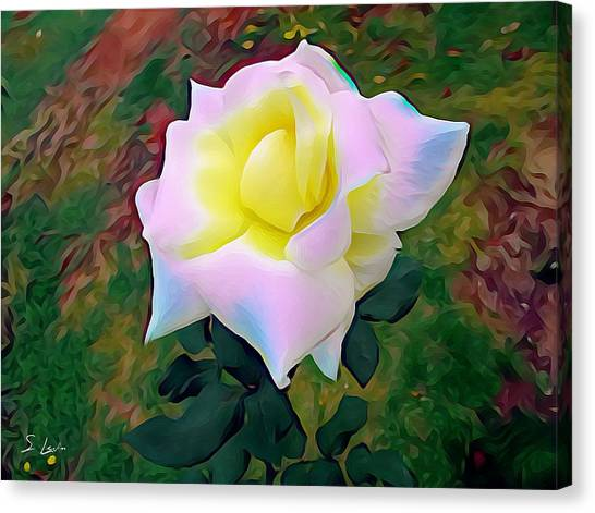 White Rose 02 ...22.54 Photograph Picture Canvas Print