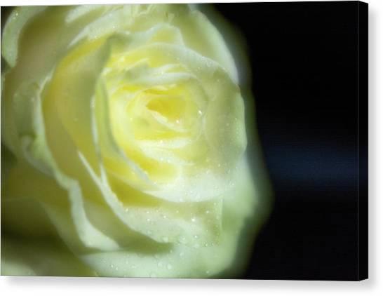 White Rose 4 Soft Canvas Print