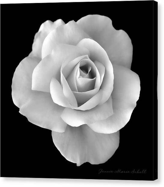 White Rose Flower In Black And White Canvas Print