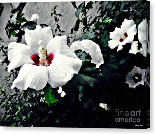 Althea Canvas Print - White Rose Mallows 2 by Sarah Loft