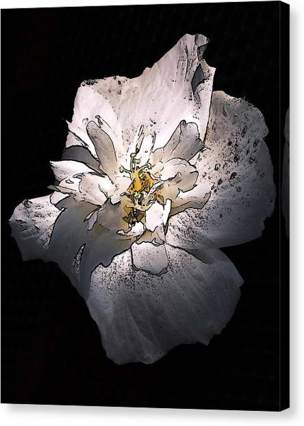 White Rose Of Sharon Canvas Print