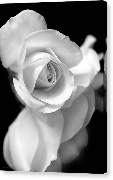 White Rose Petals Black And White Canvas Print