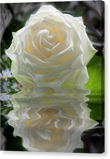 White Rose Reflection Canvas Print