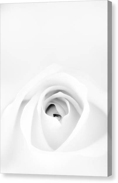 Soft Canvas Print - White Rose by Scott Norris