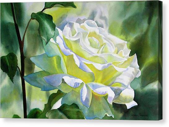 Watercolor Rose Canvas Print - White Rose With Yellow Glow by Sharon Freeman