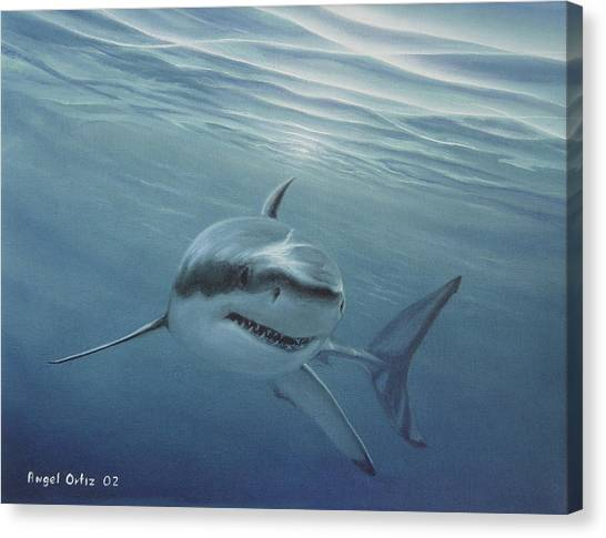 White Shark Canvas Print