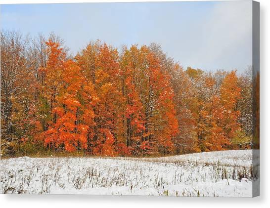 White Snow In Autumn Canvas Print
