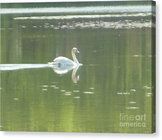 White Swan Silhouette Canvas Print
