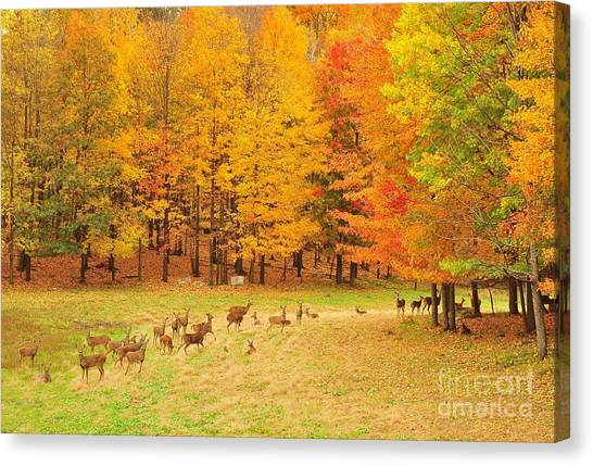 White Tail Deer Herd Canvas Print