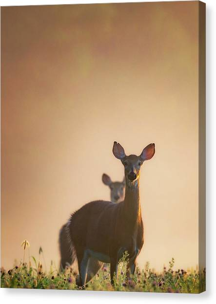 Sunrise Canvas Print - White-tailed Deer 2016 by Bill Wakeley