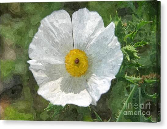 White Thistle Canvas Print