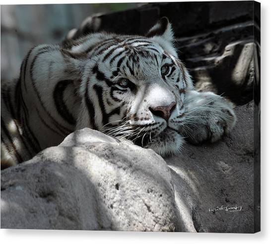 White Tiger Contiplation Canvas Print