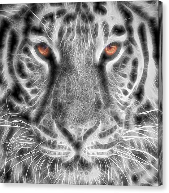 Bengals Canvas Print - White Tiger by Tom Mc Nemar