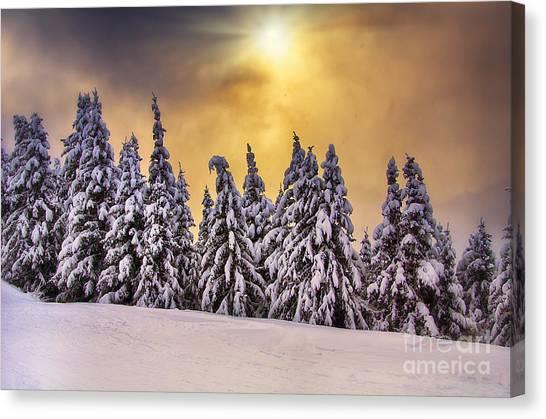 White Trees Canvas Print by Alessandro Giorgi Art Photography