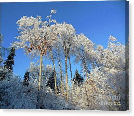 White Trees Clear Skies Canvas Print