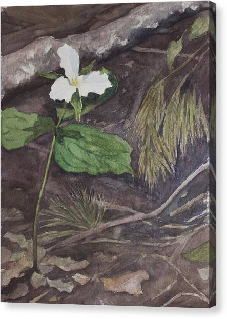 White Trillium  Canvas Print by Debbie Homewood