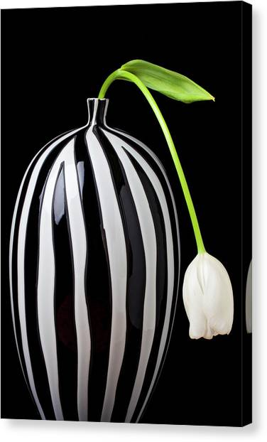 Tulips Canvas Print - White Tulip In Striped Vase by Garry Gay