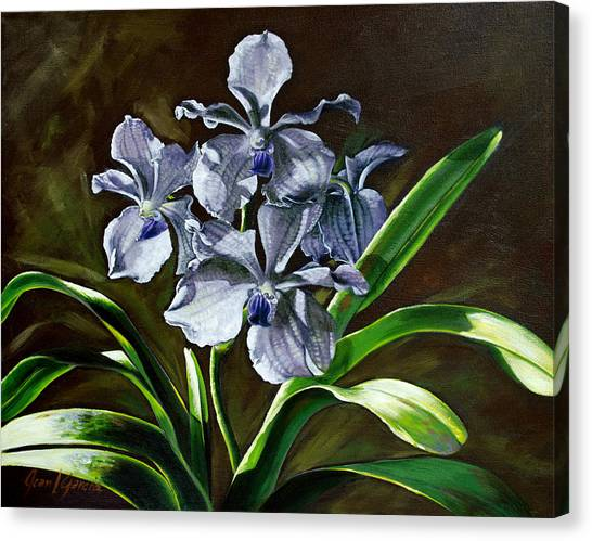 Morning Vanda Canvas Print