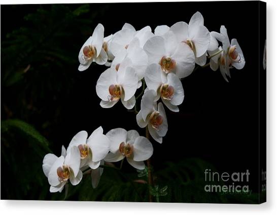 White Velvet Canvas Print