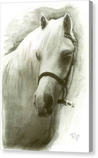 White Welsh Pony Canvas Print