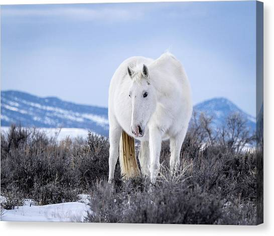 White Wild Horse Mystic Of Sand Wash Basin Canvas Print
