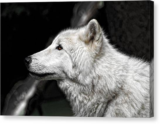 Lucky Canvas Print - White Wolf by Lucky Chen