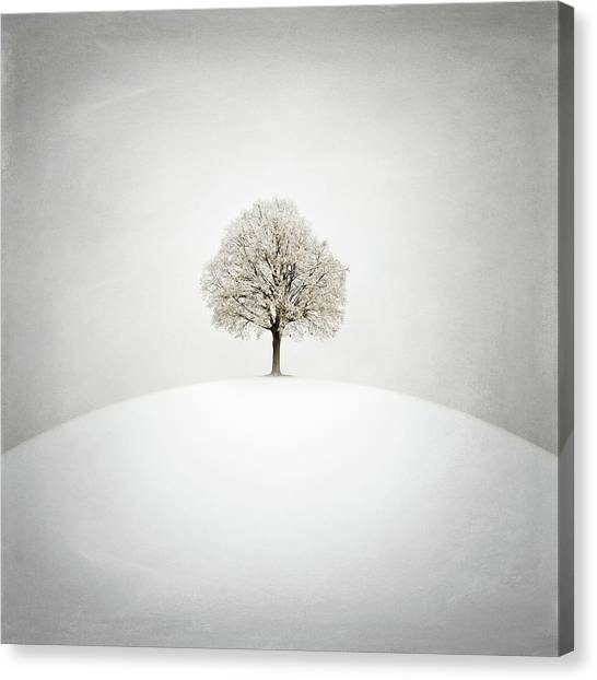 Winter Canvas Print - White by Zoltan Toth