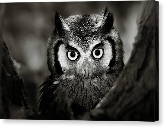 Owls Canvas Print - Whitefaced Owl by Johan Swanepoel