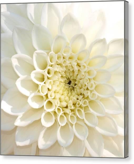 Whiteflow Canvas Print