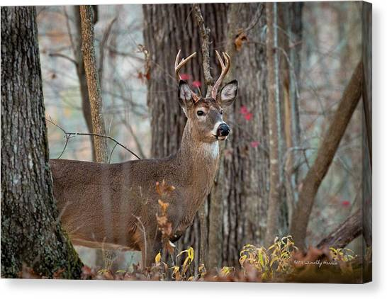 Whitetail #60 Canvas Print