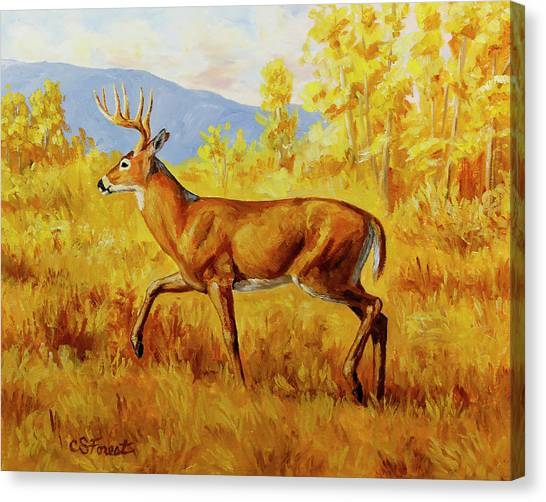 White-tailed Deer Canvas Print - Whitetail Deer In Aspen Woods by Crista Forest