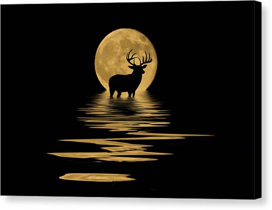 Whitetail Deer In The Moonlight Canvas Print