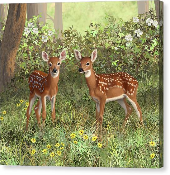 White-tailed Deer Canvas Print - Whitetail Deer Twin Fawns by Crista Forest