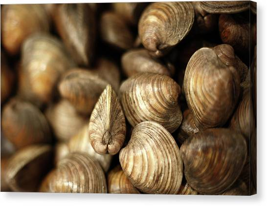 Clams Canvas Print - Whole Clams by Todd Klassy