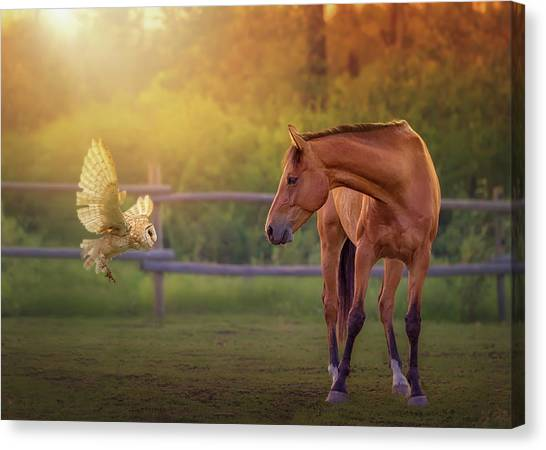 Whoo Are You? Canvas Print