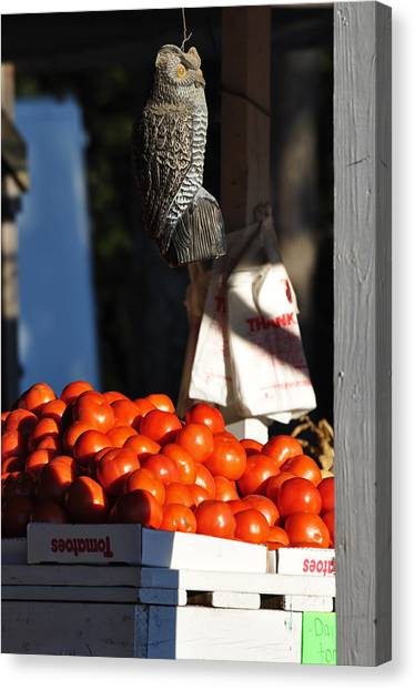 Who's Tomatoes Canvas Print by Jan Amiss Photography