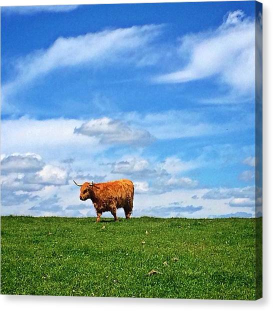 Big Sky Canvas Print - Highland Cow by Jessica Overmier