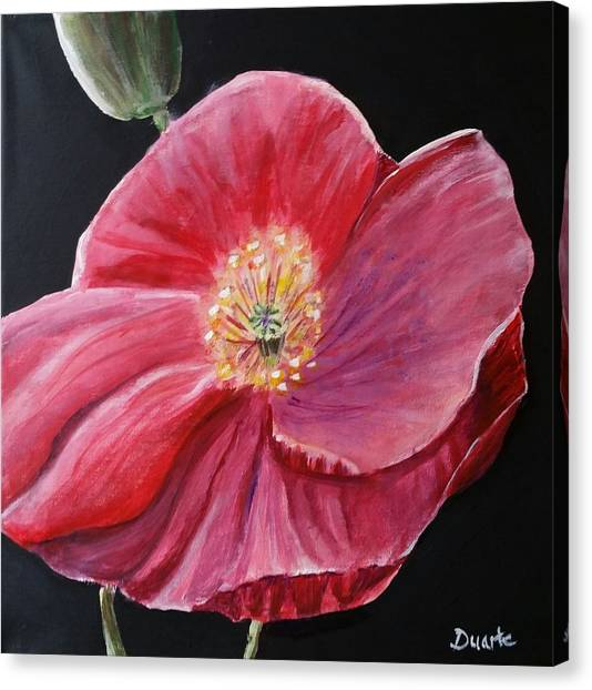 Shirley Poppy Canvas Print