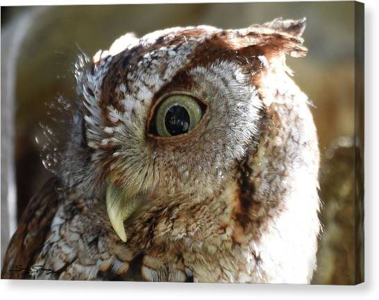 Preditory Canvas Print - Wide Eyed Screech Owl by Sally Sperry