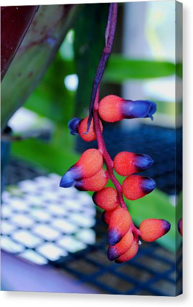 Wild About Bromeliads2 Canvas Print