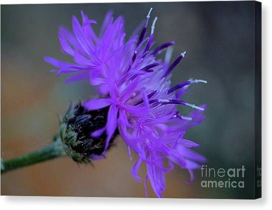 Wild And Beautiful 32 Canvas Print