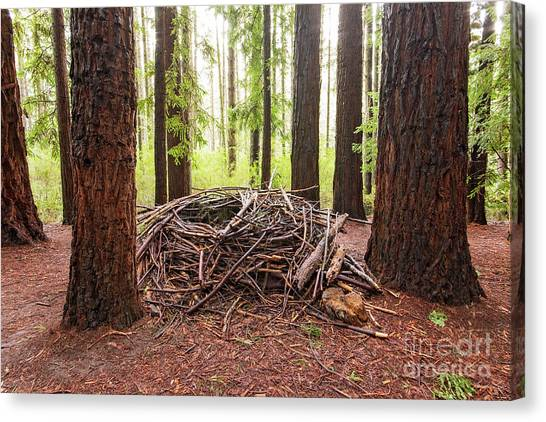 Redwood Forest Canvas Print - Wild And Woven by Linda Lees