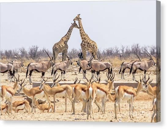 Wild Animals Pyramid Canvas Print