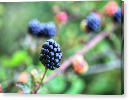 Wild Berries Canvas Print - Wild Berries  by JC Findley